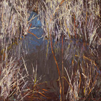 Reflection in the Reeds
